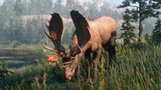 Red Dead Redemption 2: Einführung in die Tierwelt