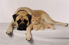 """THE VOICES - Heute ist """"Liebe-Dein-Haustier-Tag""""!"""